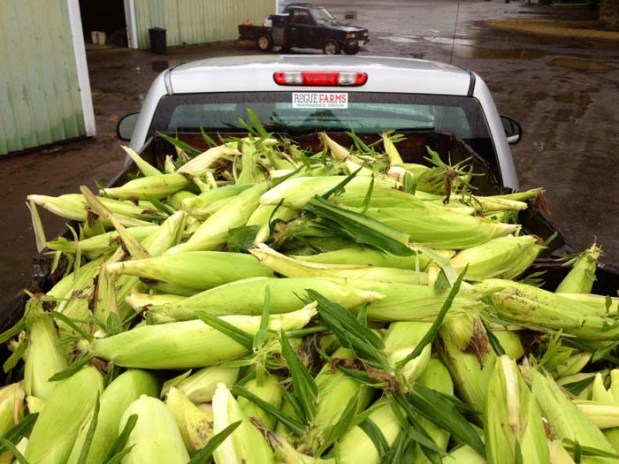 We loaded the rest of the picked corn into the truck and drove the crop over the Oregon Cascades to our Farmstead Malt House in Tygh Valley.