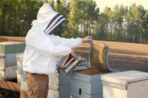 Beekeeper With Smoker