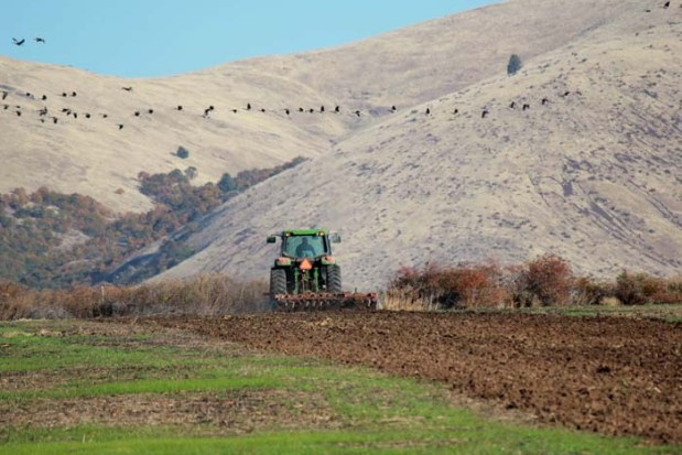 Plowing a field of spring barley begins in the fall at Rogue Farms in Tygh Valley, Oregon.