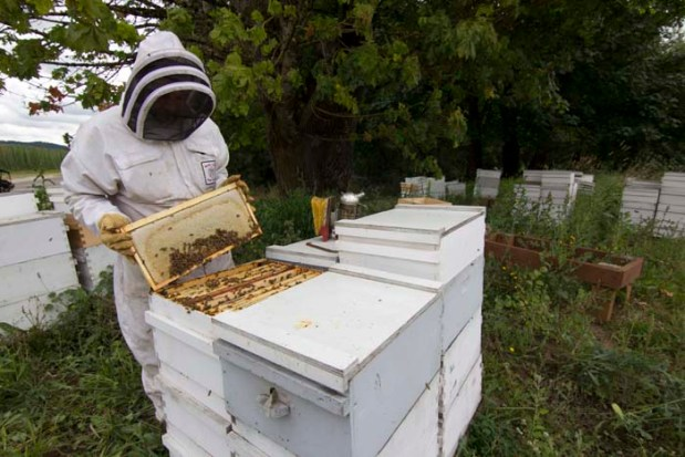 119 Colonies of Honeybees