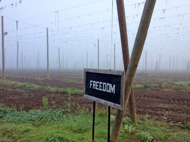 Freedom hop rows.