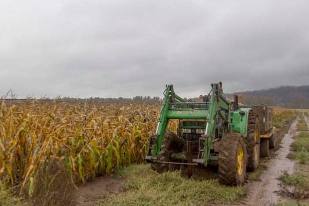 We began picking under dreary November skies.
