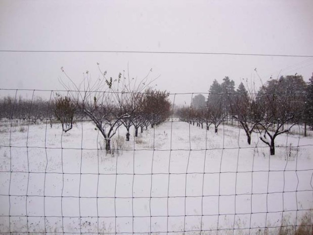 Our 19-acre fruit orchard.