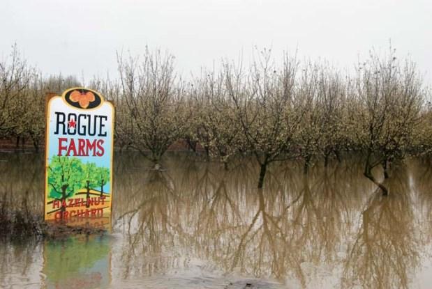 Flooding in Hazelnuts