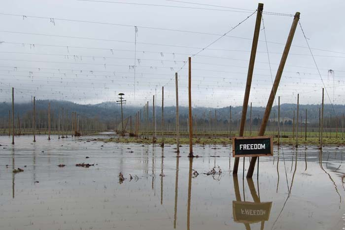 Rogue Farms Freedom Hops during the Great Flood of January, 2012.