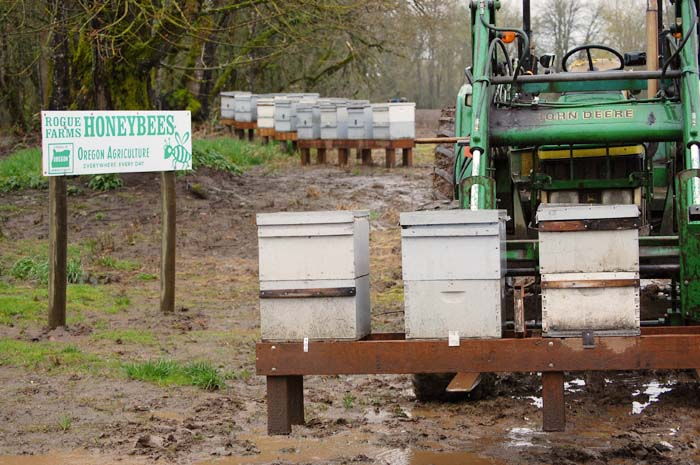 Moving our honeybees out of the flood zone in March of 2012.
