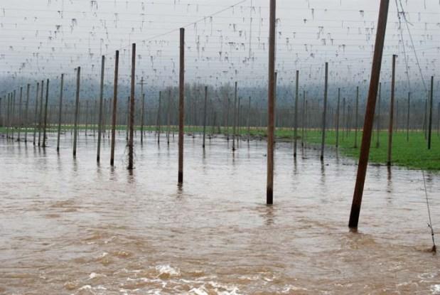 Water Rushing Into Hopyard