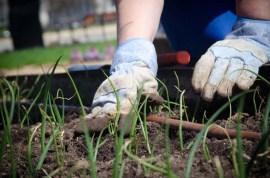 Gardening USDA