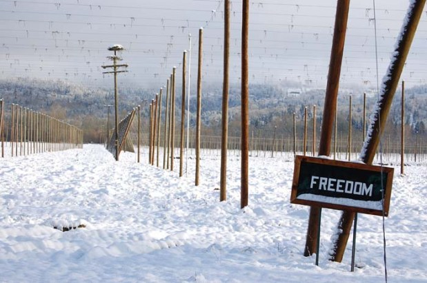 Snow and Freedom Hops