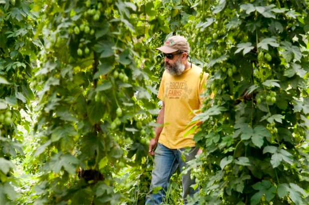 Brewmaster John Maier in the rows of Rogue Farms Freedom hops.