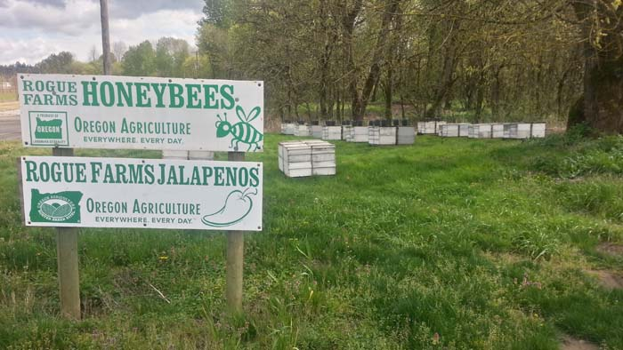 Some of the hives near the entrance to Rogue Farms. FYI, we won't plant the jalapeños until June.