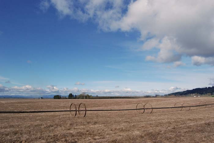 What the field of Dream Rye looks like today. It should be filled with bright green shoots of rye.