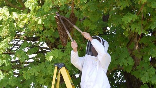Beekeeping Banner
