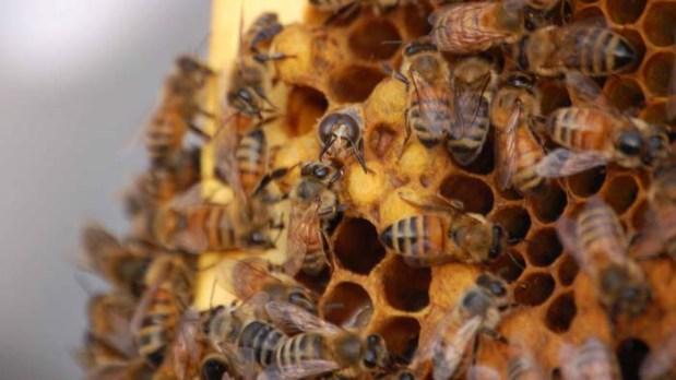 Inside Hive