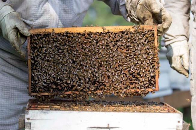 Hive Splitting-051815-0030