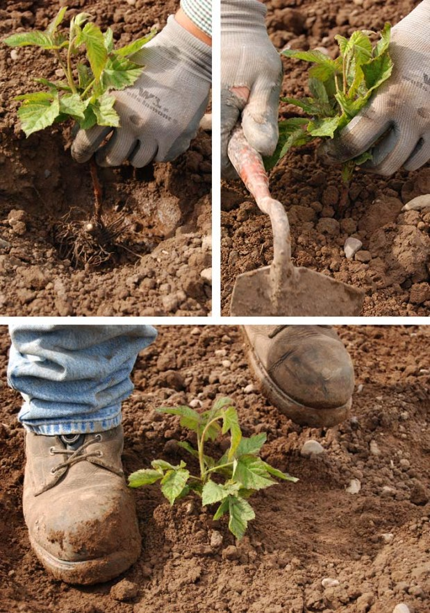 Planting Collage