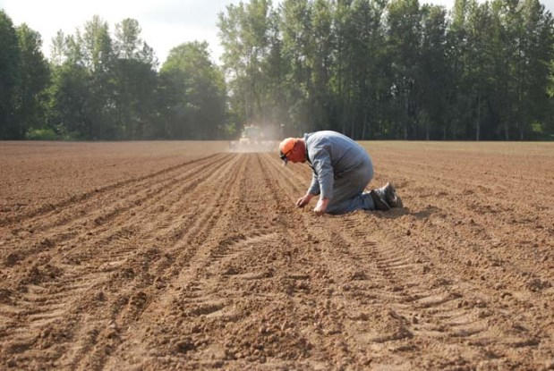 pumpkin planting 41
