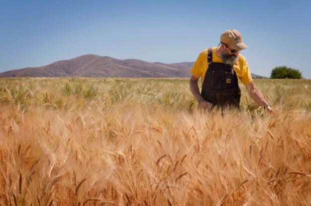 John in Barley