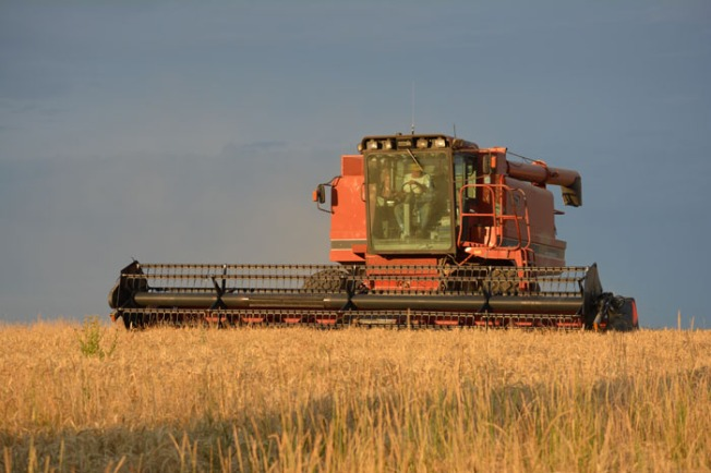 Last year's barley harvest at Rogue Farms in Tygh Valley, Oregon.