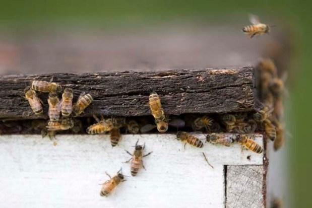 Hive Splitting-051815-0001