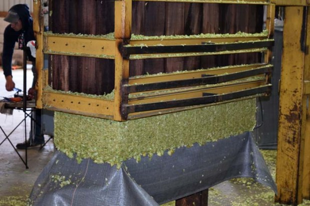 Hops Baling Bales Aug 2015 18