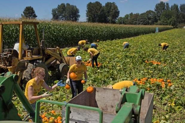 Pumpkin-Picking--22