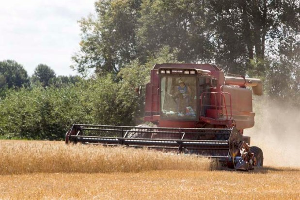 A combines reaps, threshes and winnows McKercher wheat at Rogue Farms of Independence, Oregon.