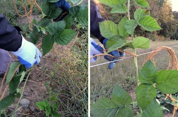 Marionberry Training Aug 2015 IMG_1488