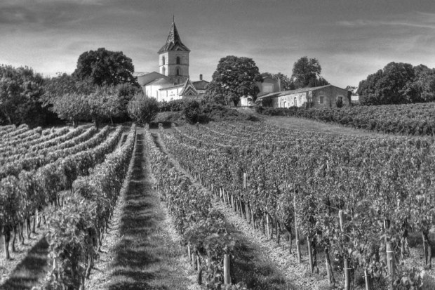 The vineyards of Bordeaux, where the idea of terroir was born. Photo by Michael Clarke.