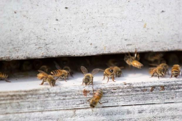 Hive Splitting-051815-0002