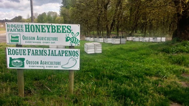 Honeybee apiary