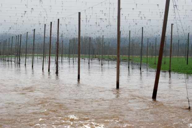 Centuries of flooding created the soil here at Rogue Farms, and the annual winter floods replenish it.