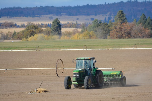 After working in the lime, we seeded 100 acres of Risk malting barley.