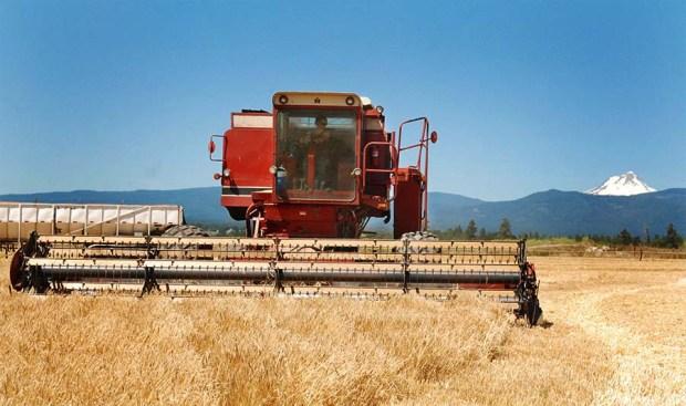 BarleyHarvest2011_05