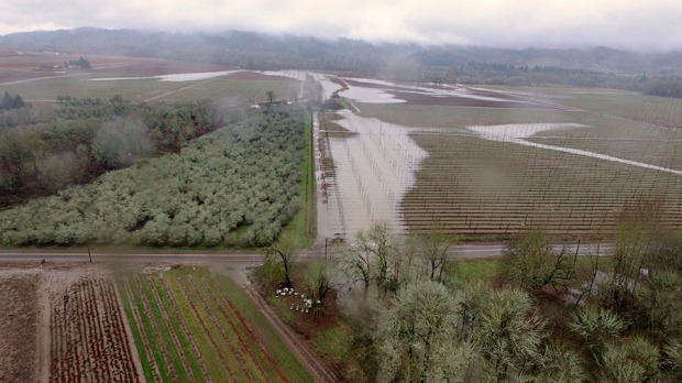 Flooding of Rogue Farms hopyard from above.