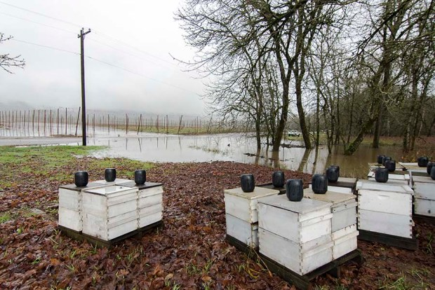 Moved Hives