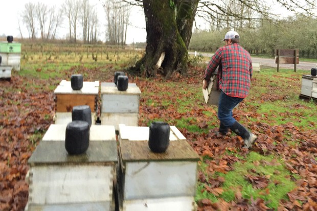 Moving Hives