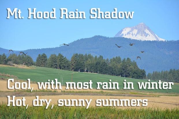 Mt Hood Rain Shadow