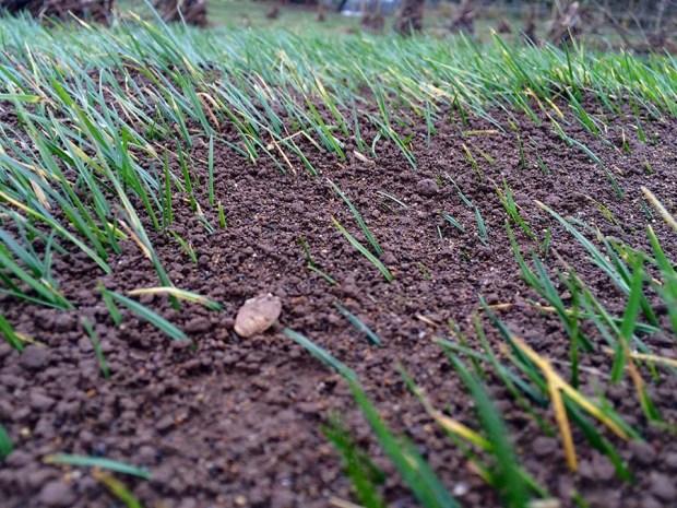 New Dirt