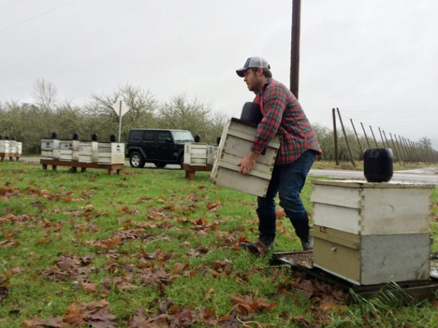 Rogue Beekeeper Andrew moves hives out of the flood plain.