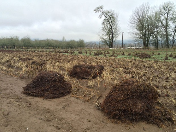 We found these piles of compost, weighing hundreds of pounds apiece, some 300 yards from where we left them.