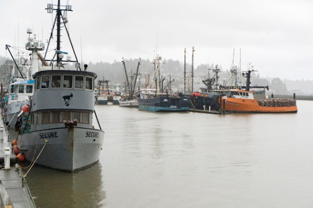 The docks of Newport's commercial fishing fleet on Yaquina Bay.