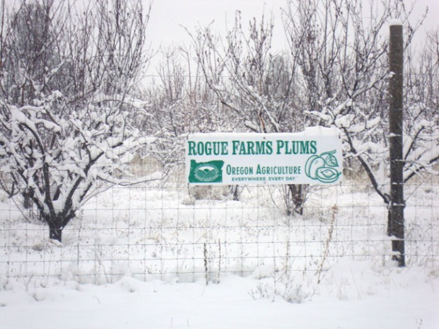 Bottom: A winter wonderland in the Rogue Farms orchards.