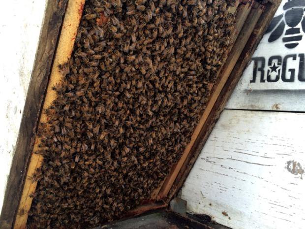 Honeybees Mar 28, 12 50 44 PM