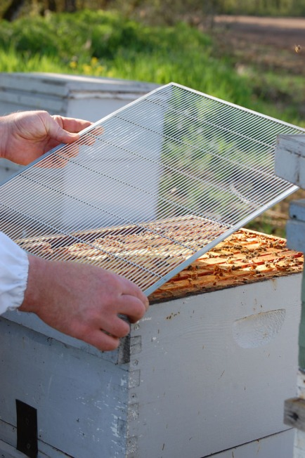 Placing a queen excluder between hive boxes.