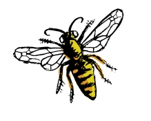 Honeybee Drawing