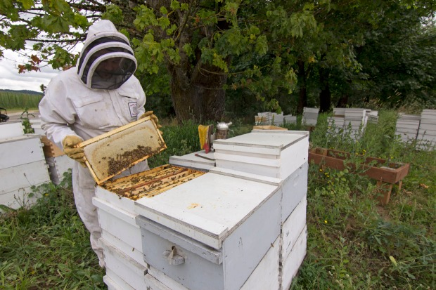 Honey Harvest - John Maier - 020_070114