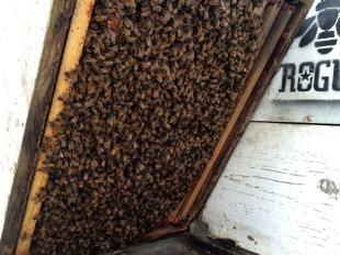 honeybees-mar-28-12-50-44-pm