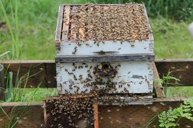Splitting Hives-56(sm)